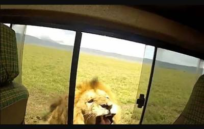 The tourist narrowly escaped being bitten by a lion