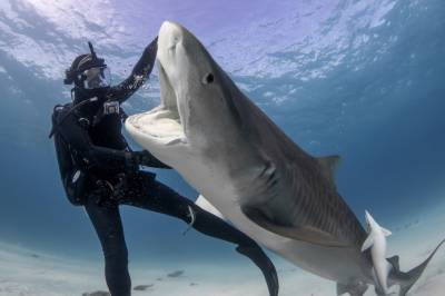 DISCOVERY CHANNEL'S SHARK WEEK 2020 SWIMS ONTO TELEVISION SCREENS SUNDAY, AUGUST 16