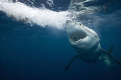 5 facts about the ocean's deadliest creatures, ahead of Shark Week 2020